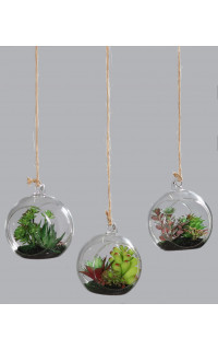 suspension succulente 26 cm