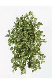 HYPOESTES mini artificiel 50 cm