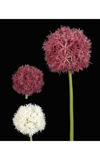 ALLIUM artificiel 67 cm