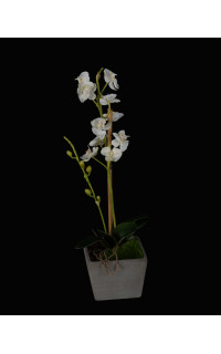 PHALAENOPSIS artificielle en pot 38 cm