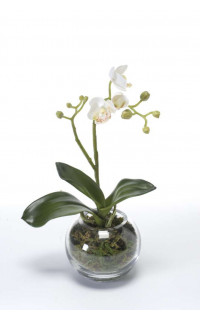 Phalaenopsis ORCHIDEE artificielle en pot verre 29 cm