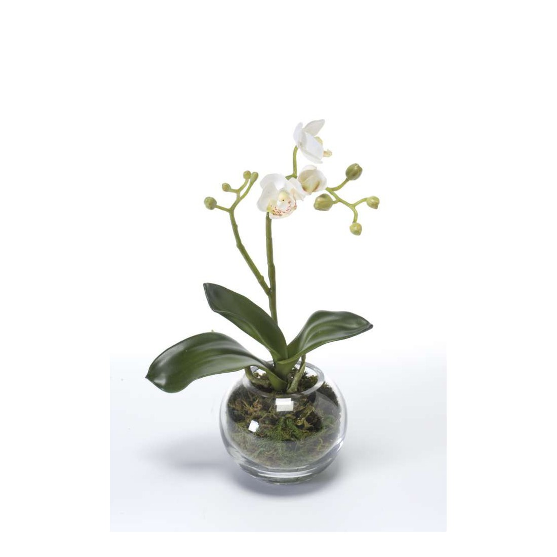 Phalaenopsis orchidee artificielle en pot verre 29 cm compositions artificielles for Pot de plante design