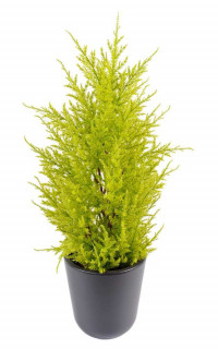 CYPRES artificiel MINI JAUNE VERT 55 cm ( Juniperus)
