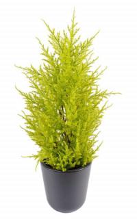 CYPRES artificiel MINI JAUNE VERT  55 cm ( Juniperus)