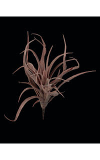 TILLANDSIA STRICTA artificiel 23 cm