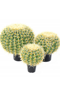 CACTUS artificiel BALL diam 30 à 48 cm ou  Golden Barrel Cactus