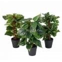 Mini plante artificielle 36 cm tuteur coco
