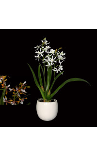composition ORCHIDEE oncidium artificielle 40 cm