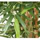 BAMBOU artificiel buisson 120 à 180 cm