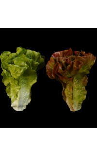 Salade LAITUE artificielle verte ou brune 16 cm