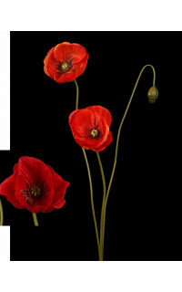 COQUELICOT artificiel 2 fleurons 1 bouton 75 cm rouge ou orange