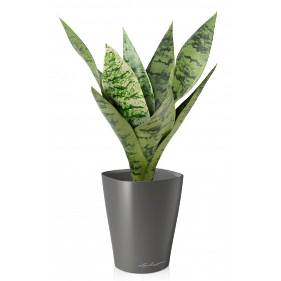 SANSEVIERIA artificiel piquet ou sanseveria 35 cm