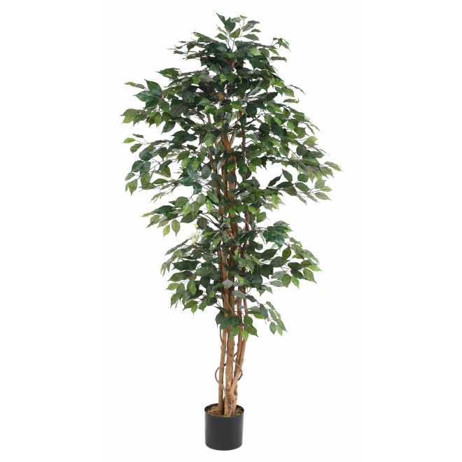 FICUS artificiel multitroncs bon marché 190 cm