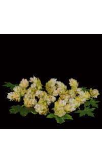 boite 29 fleurs ou cône de houblon