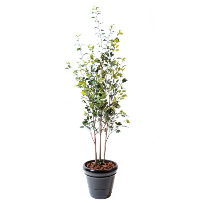 FICUS artificiel buisson plast 180 cm