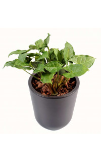 SYNGONIUM artificiel mini plast 23 cm