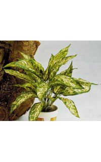 AGLAONEMA artificiel 40 cm