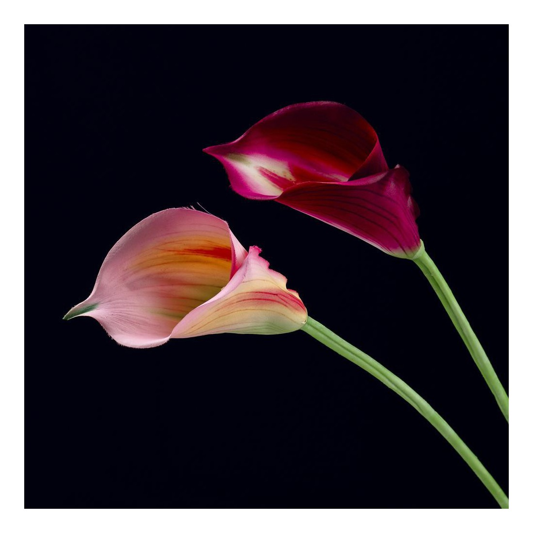 arum artificiel rose 72 cm fleurs intemporelles artificielles arum calla artificielles reflets. Black Bedroom Furniture Sets. Home Design Ideas