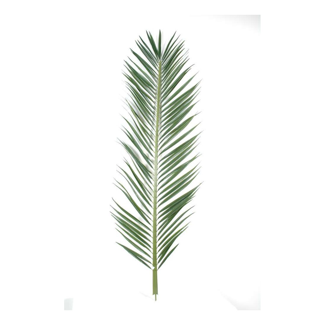 Feuille palmier for Feuille de zinc pas cher