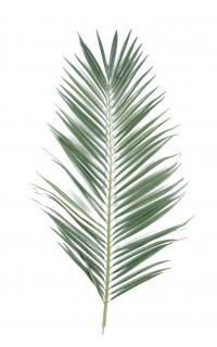feuille PALMIER MAJESTY PALME 95 et 149 cm