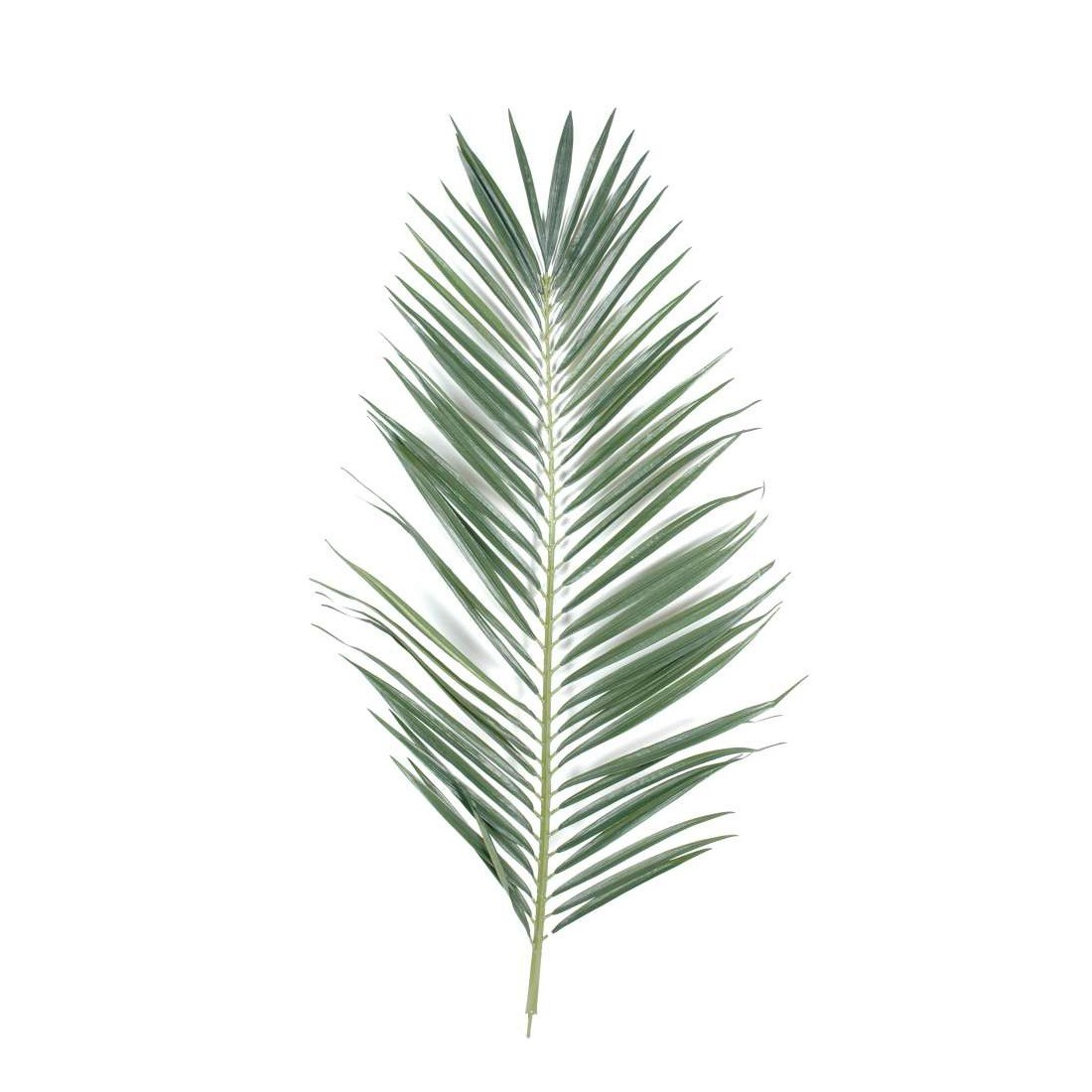 Feuille palmier - Sapin en pot jardiland ...