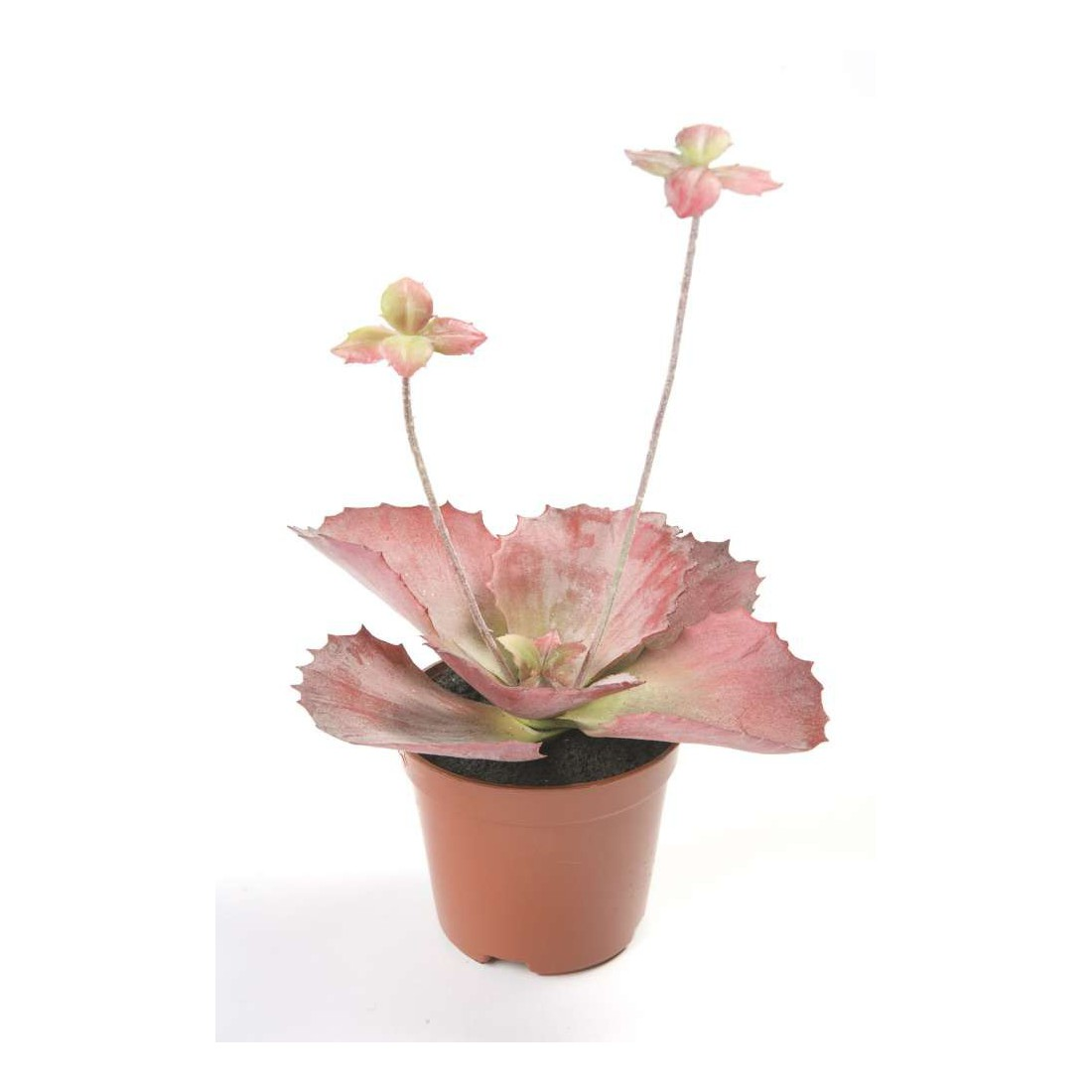 Cactus plantes grasses mini cactus et plantes grasses for Plantes artificielles lyon
