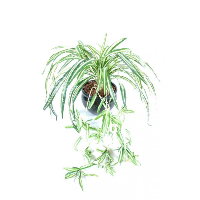 Chlorophytum artificiel 80 cm plantes artificielles for Plantes artificielles lyon
