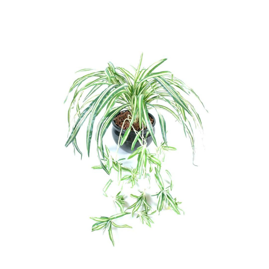chlorophytum artificiel 55cm plantes artificielles plantes vertes artificielles reflets nature lyon. Black Bedroom Furniture Sets. Home Design Ideas