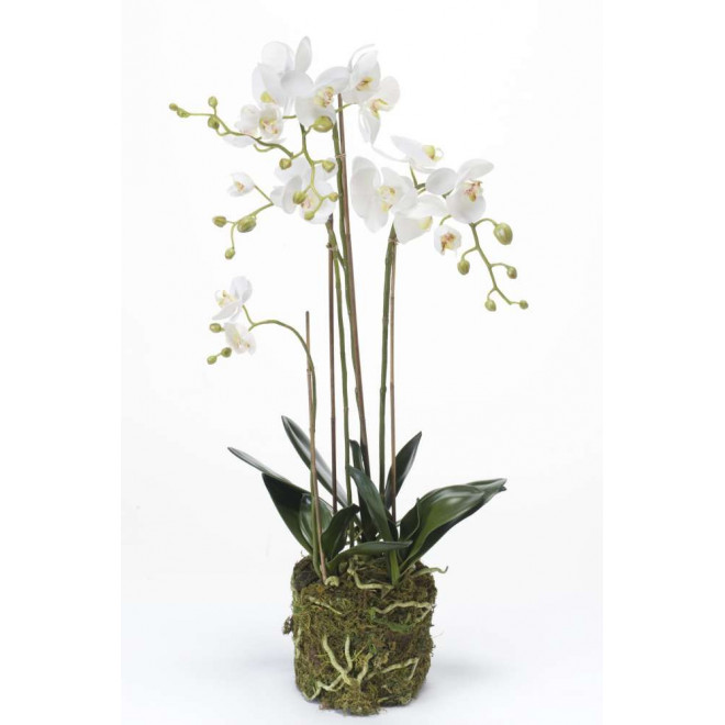 composition Phalaenopsis ORCHIDEE artificielle 80 cm blanc