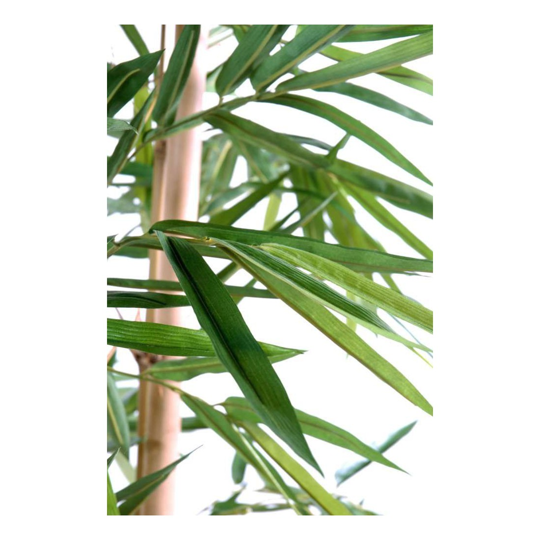 bambou artificiel 3 troncs feuille large 210 et 270 cm arbres artificiels reflets. Black Bedroom Furniture Sets. Home Design Ideas