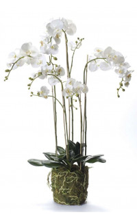 composition Phalaenopsis ORCHIDEE artificielle 130 cm
