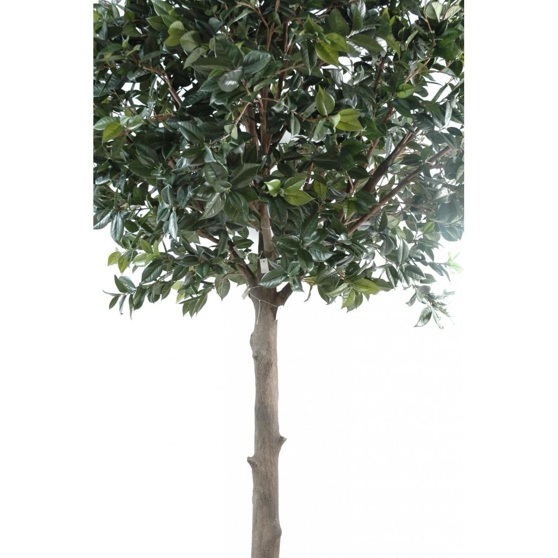 arbre fruitier artificiel camelia japonica tree 300 cm. Black Bedroom Furniture Sets. Home Design Ideas