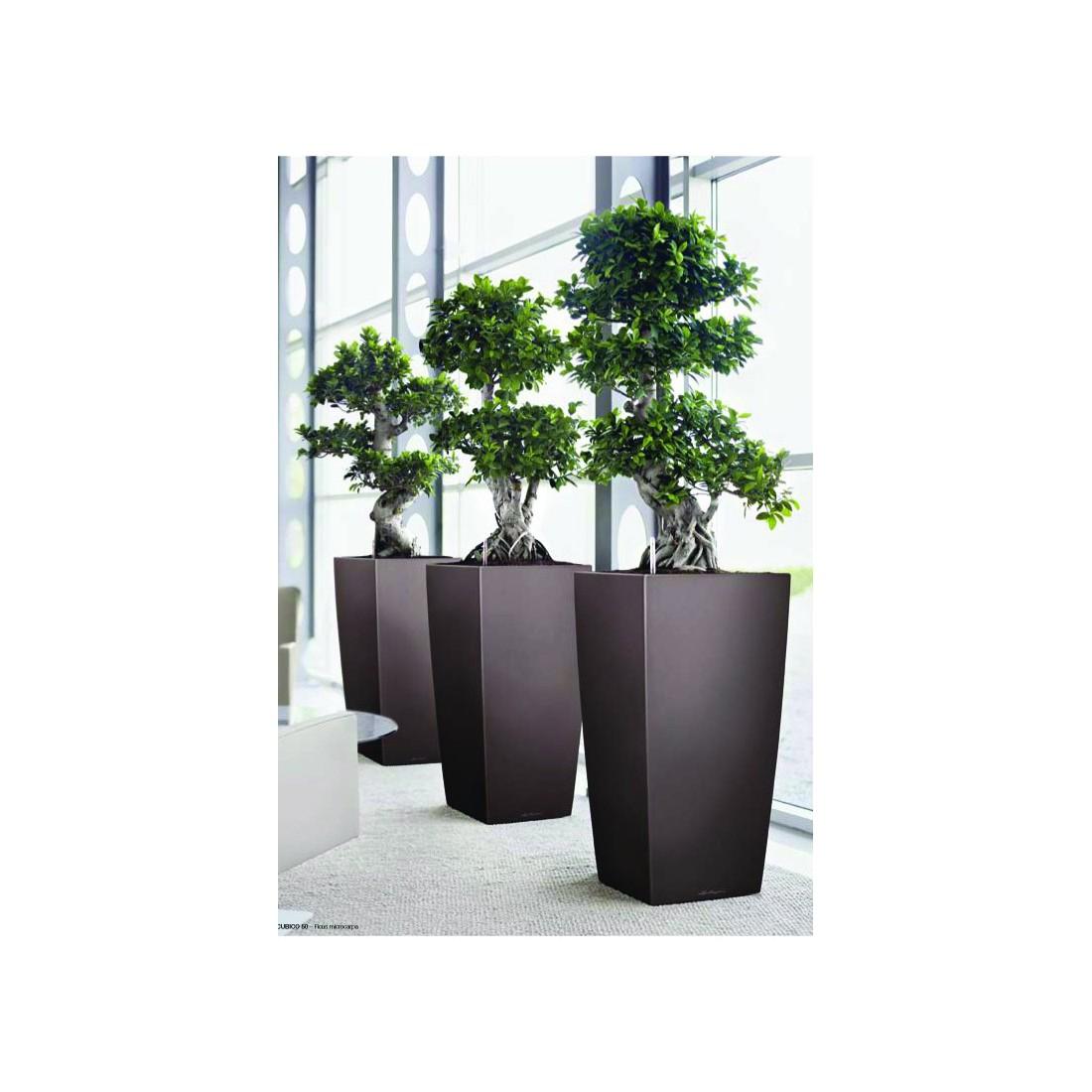 lechuza cubico 30 hteur 56cm pots hauts artificielles reflets nature lyon. Black Bedroom Furniture Sets. Home Design Ideas