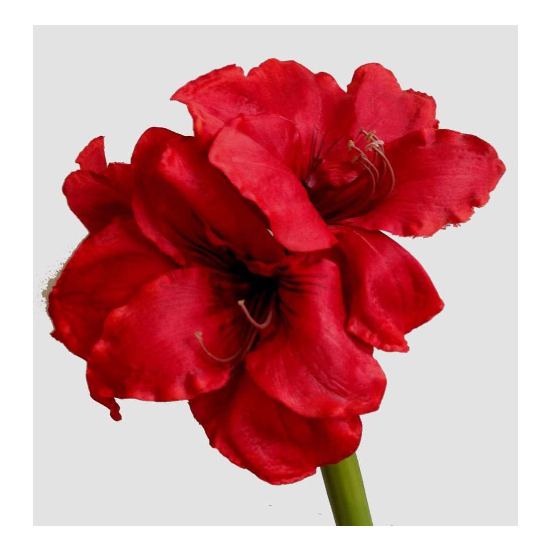 Amaryllis artificiel 70cm fleurs intemporelles for Amarylice fleuriste lyon