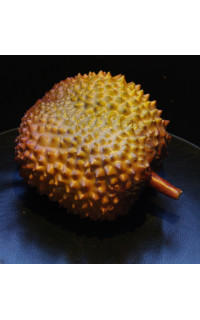 durian fruit in spanish fruit bouquet
