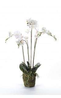 composition Phalaenopsis ORCHIDEE artificielle 95 cm blanc