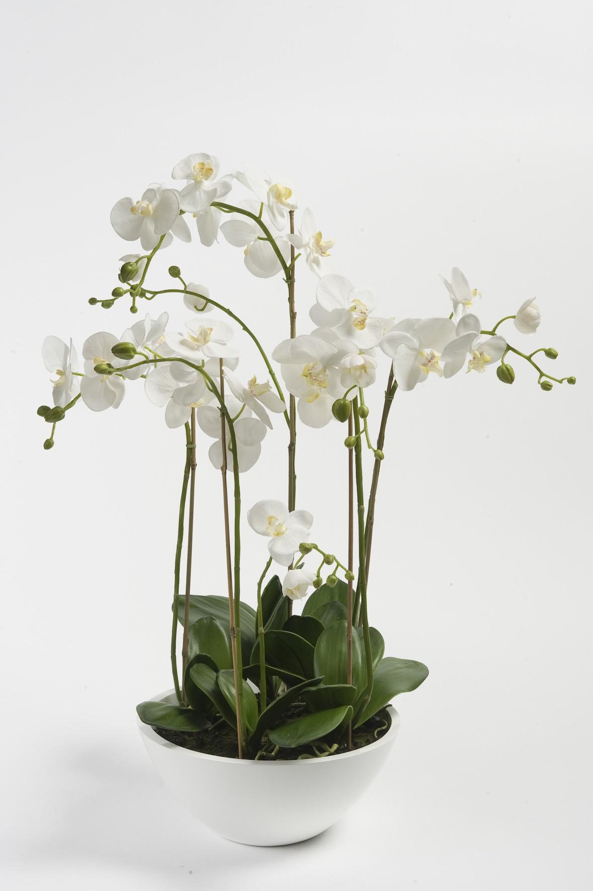 orchidee blanche artificielle