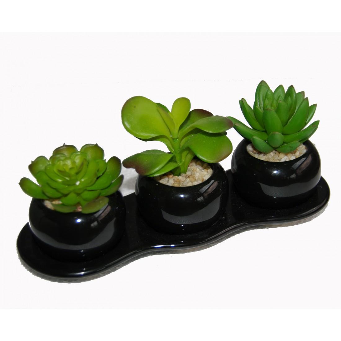 plateau de cactus 22 cm cactus plantes grasses reflets nature lyon. Black Bedroom Furniture Sets. Home Design Ideas