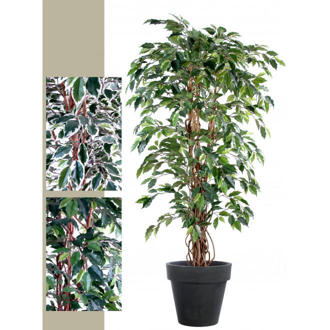avec tronc en bois v/éritable Homescapes arbre artificiel Ficus Benjamina Feuilles panach/ées 180 cm plante d/'int/érieur Figuier pleureur en pot