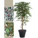 FICUS artificiel TRONC SIMPLE Grandes Feuilles  vert et vert/crème 150 à 270 cm