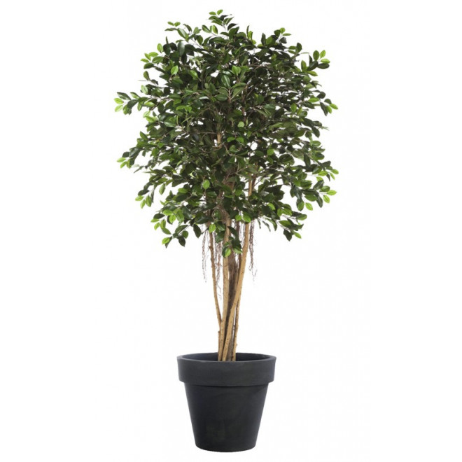 FICUS artificiel RETUSA 150 à 210 cm