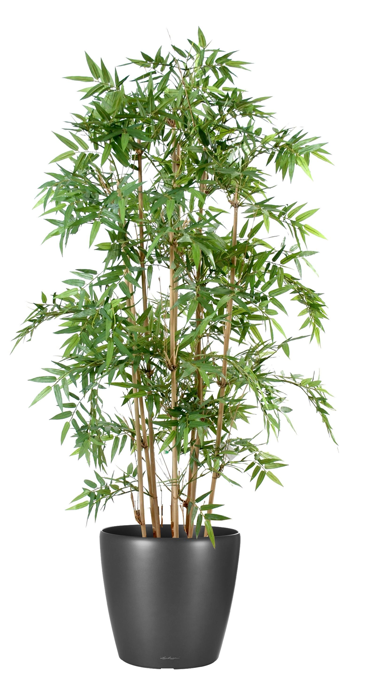 plantes plastiques
