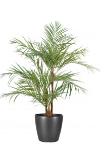 ARECA artificiel PALM 3 troncs 170 et 220 cm
