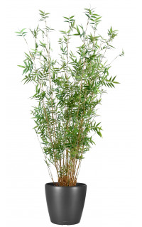 Bambous artificiel vente d 39 arbres et de plantes - Cypres artificiel pas cher ...
