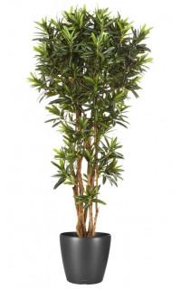Croton artificiel GOLDFINGER Reflexa 150 et 180 cm