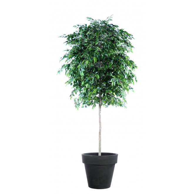 FICUS artificiel NATASJA tree 270 cm