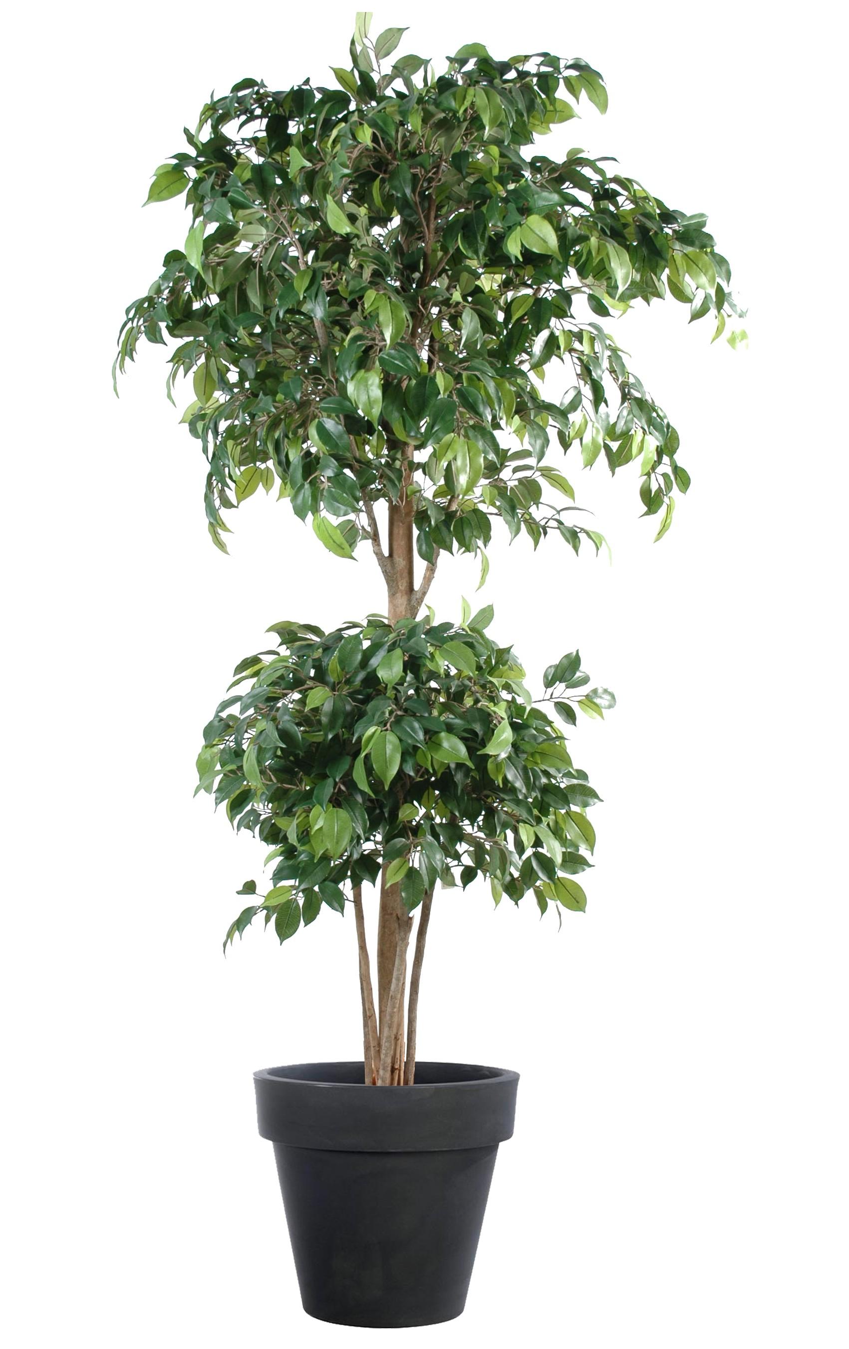 Ficus Artificiel-180 cm