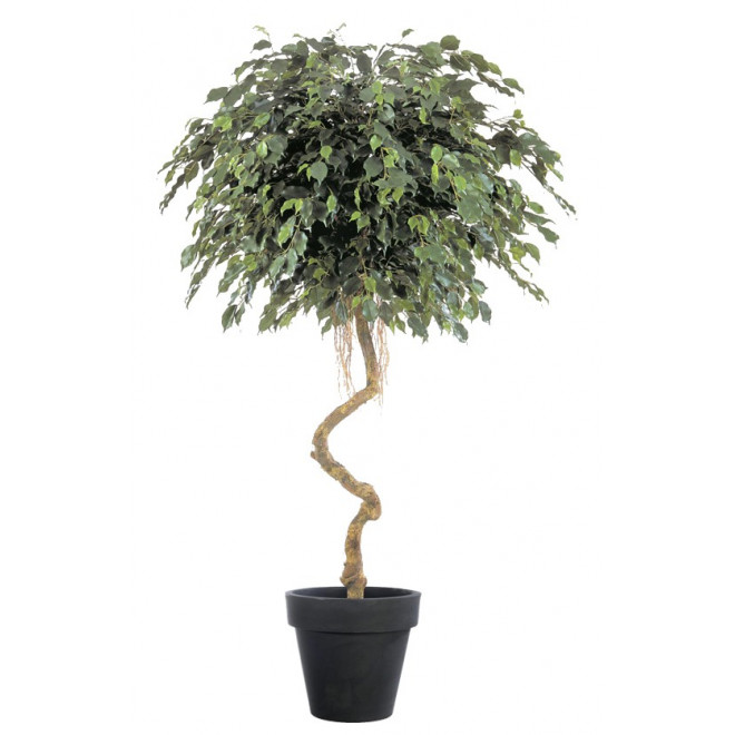 FICUS artificiel EXOTICA crazy trunc 180 cm