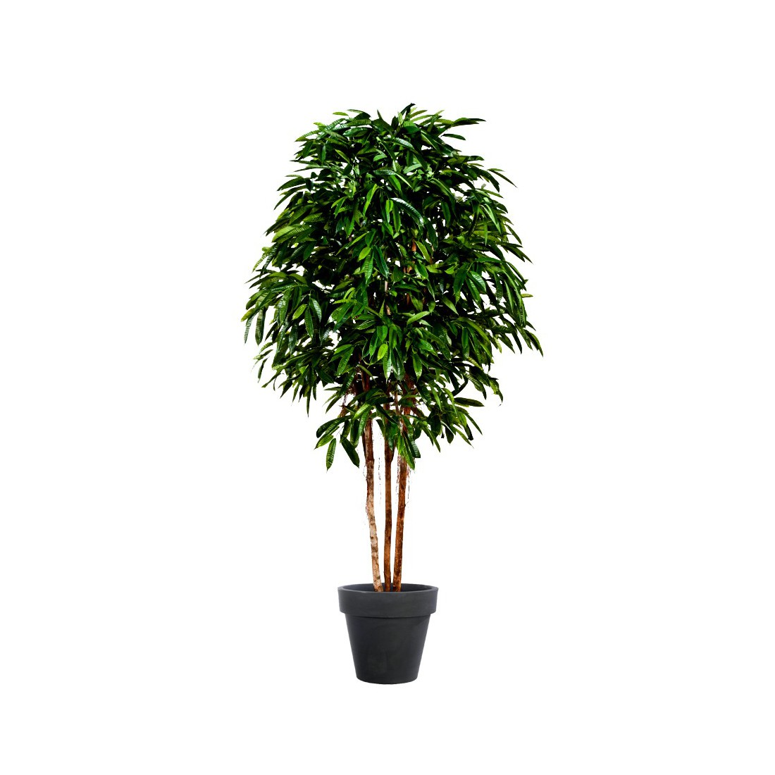 Ficus artificiel longifolia multi tronc 270cm arbres for Ficus artificiel