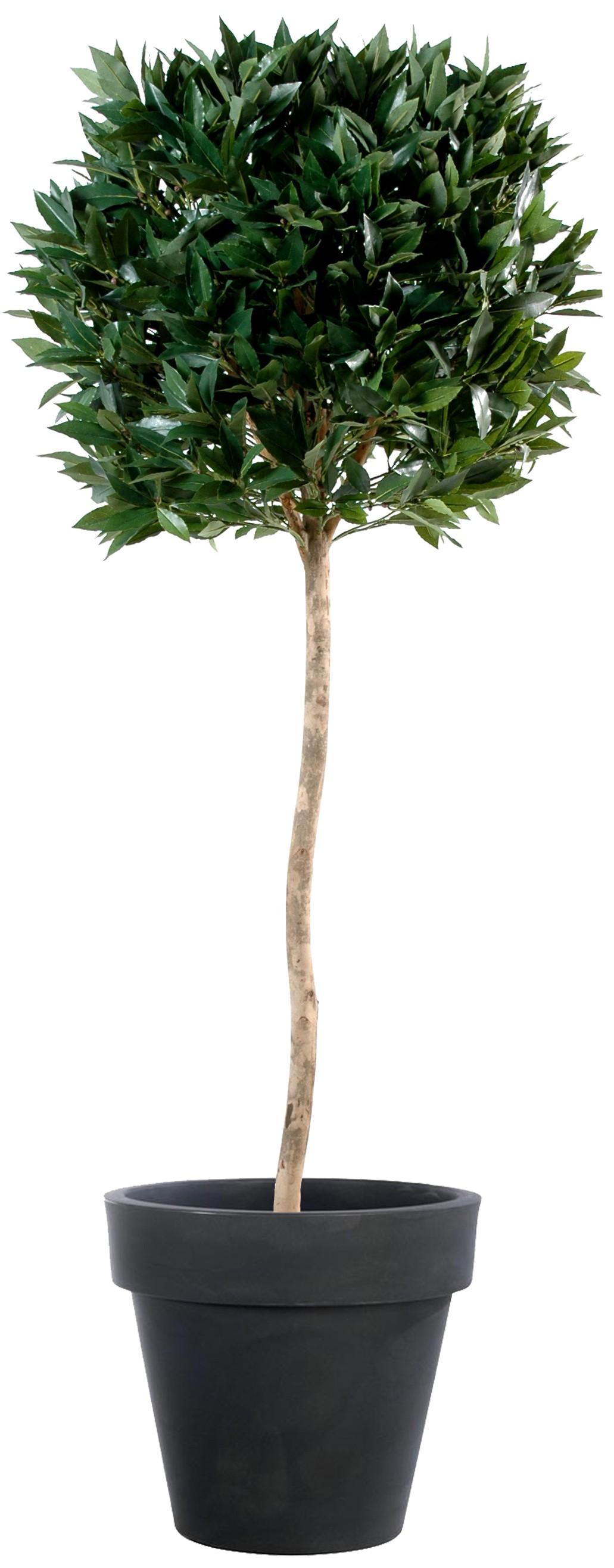Laurier Artificiel Cone-Tronc Naturel-120cm